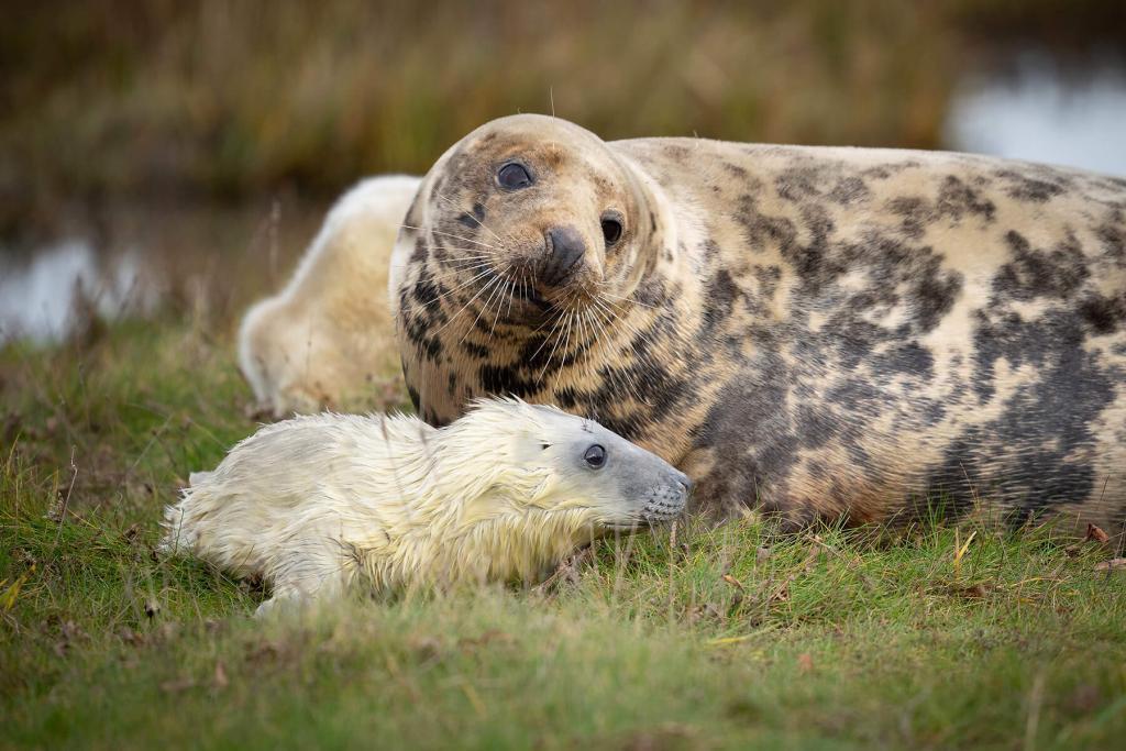 Seals at Donna Nook